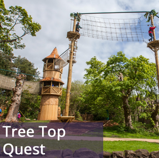 Tree Top Quest
